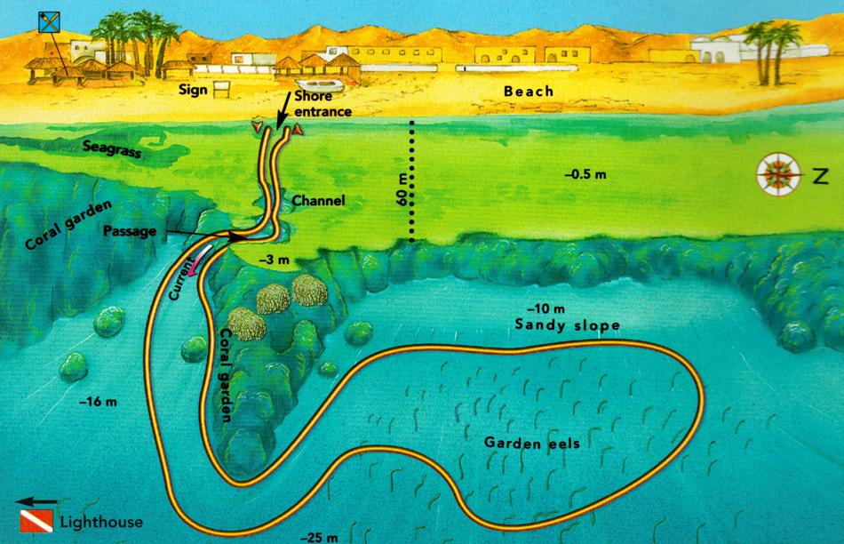 Eel Gardens :: Dahab Divers Lodge